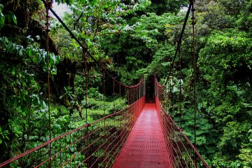 Monteverde-Rainforest-Tour-Costa-Rica