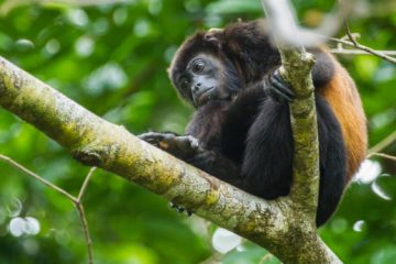 Monkey Costa Rica Tour