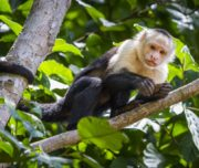 monkey tours costa rica