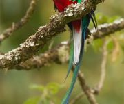 quetzal-costarica