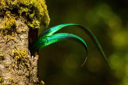 Natural Wonders Tour Costa Rica Green